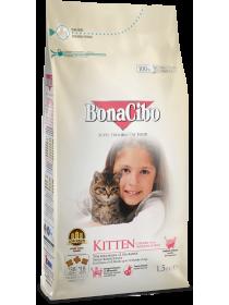 BonaCibo Kitten